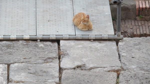 Cats at Tor di Argentina